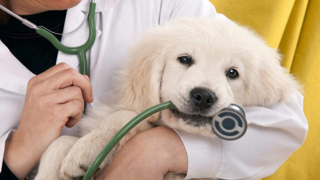 carrera de medicina veterinaria y zootecnia umsa